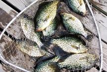 Lake Vermilion Fishing