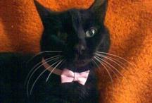 RIP sweet kitty.