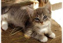 Kitty / by Brig DM