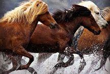 Horses ❤️ / All beautiful horses that i found