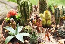 Piante grasse cactus suculentas