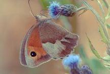 Farfalle, butterflies, papillons, mariposas, Schemetterlinge. /