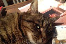Monti , la Micettona & Friends / I gatti e i cani della mia vita