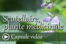 Vidéos plantes médicinales