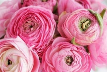 Pink - Bright