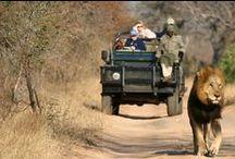 Kruger / Safari au Kruger, à vous les Big Five !