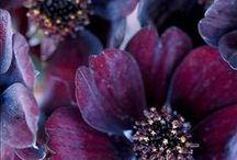 deep purple/plum/red