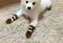 Animaux / Les animaux les plus mignons et les plus marrants que j'ai pu voir ;3
