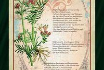 Kräuter - herbs / Wildkräuter und mehr / wild herbs