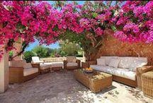 Jardin en casa / solo flora / by Victoria Sanchez