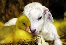 Love / Love between all God's creatures... / by Connie Thompson