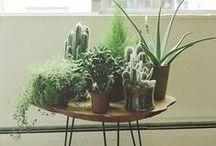 Gardens (Interior)