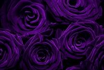 Colour - Passionate  Purple / by Alison Godfrey
