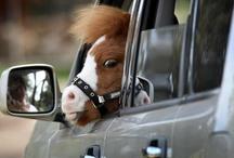 Horsein Around! <3 / by Horsing Around In LA