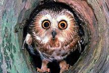 Owls and Owly things