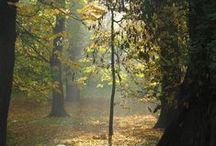 photo autumn / photo