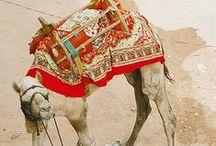 Shahida Parides Heritage