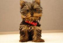 Cute Pet Pics =)