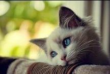 """Gatos minha vida minha paixão / """"O tempo que passamos com os gatos nunca é desperdiçado"""" ..."""
