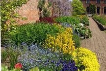 English garden / I just love English gardens. The colours , the random , the lack of austerity fascinate me .