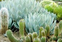 cacti&succulents