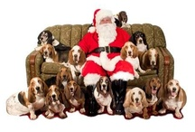 Basset Hounds/ Bassets are Assets! / by Cynthia Lutje