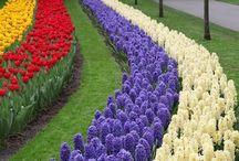 My Spring Garden / Flowers and Garden layout
