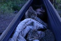 Pets love hammocks