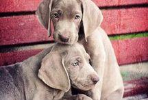 dogs / by Maiara Donancia