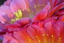 FLOWERS / by Betty Gemmen