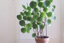 House plants, Succulants & Tillandsias