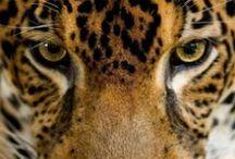 EarthRoamer Wildlife  / Wildlife seen on EarthRoamer adventures!