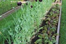 Potager~ Raised Beds