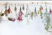 ↠ PLANT LOVE ↞ / Pflanzen, Pflege, Sukkulenten, Kakteen, Senker, Kaktus