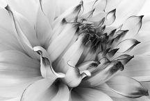 Flores blanco y negro / Flores hermosas