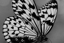 Mariposas / Maravillas