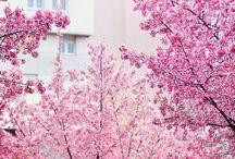 Casa con flores / Flores