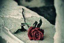 Rosas negro y colores / Rosas negras