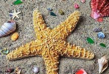 Conchas de mar / Playa