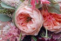 Peonías / Flores