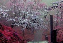 Árboles floridos / Naturaleza