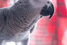 Lilly bird