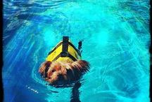 Swimming at Club Canine / We offer Swim Lessons, Group Swims, and Individual Swims