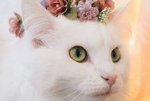 love • gatos