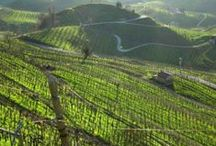 Prosecco ► Conegliano - Valdobbiadene