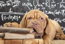 Interesting Articles Related to Dogs