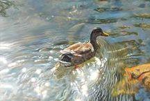 Nature & Wildlife Paintings
