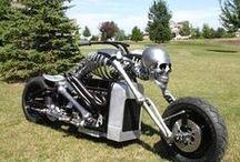 SKULL / skulls