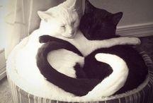 Love *-*