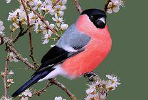 Birds / Birds.....